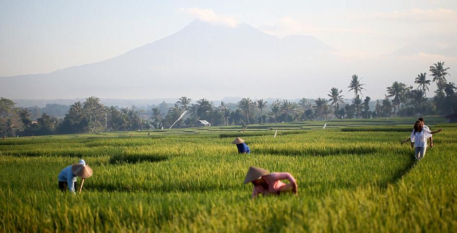Image 4 - Bali l'aventureuse