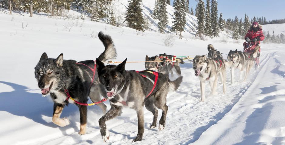 Bild 2 - Yukon Winter Dream