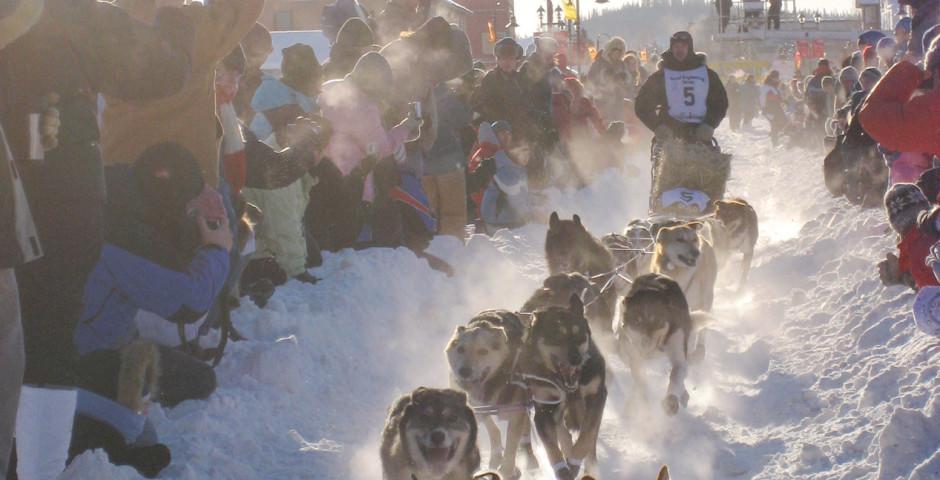 Bild 3 - Yukon Quest Dog Sledding