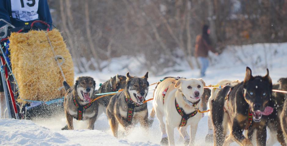 Bild 1 - Yukon Quest Dog Sledding