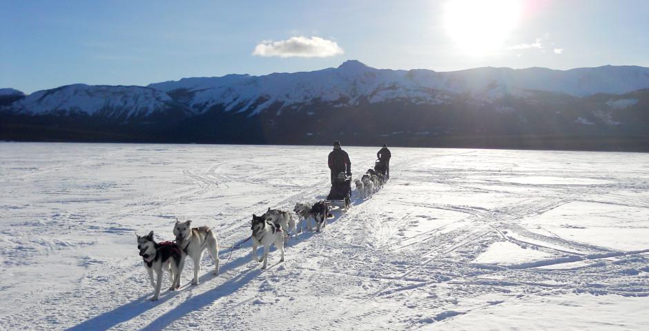 Bild 2 - Yukon Dog Sledding Adventure