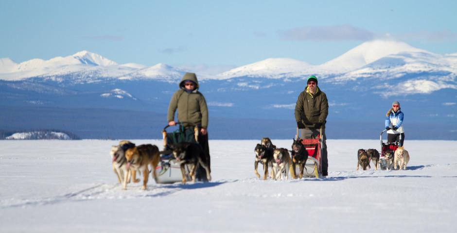 Bild 5 - Yukon Dog Sledding Adventure