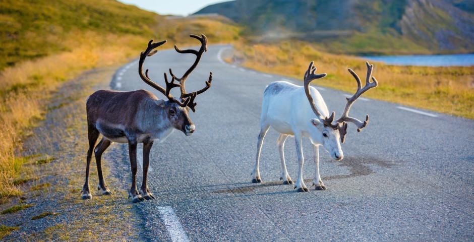 Bild 1 - Magisches Lappland