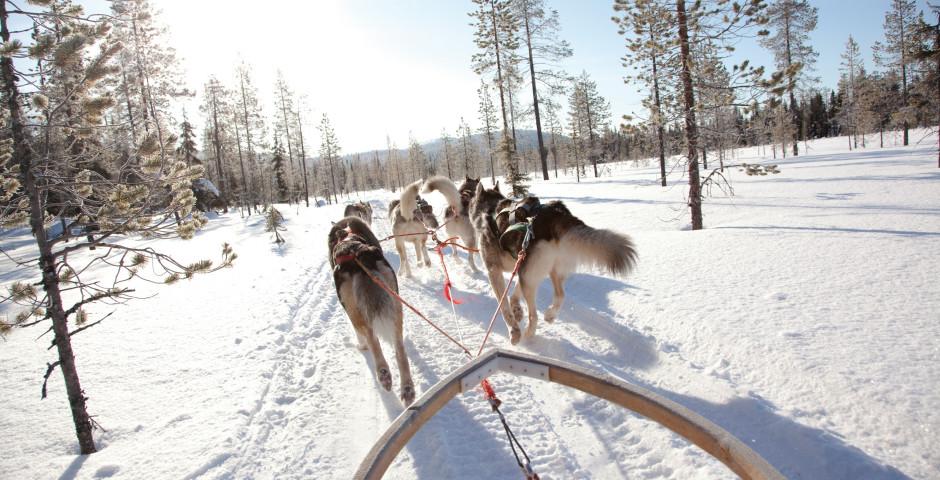 Hundeschlitten - Finnland