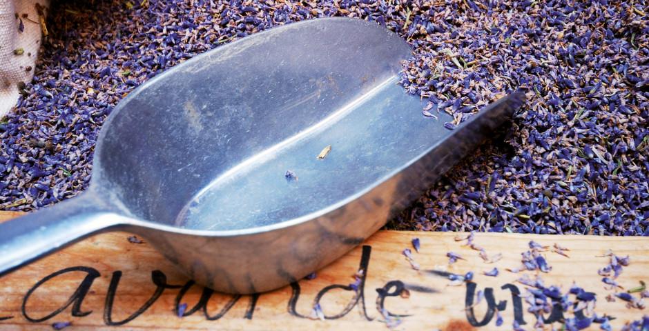 Lavendel in der Provence - Frankreich - Frankreich