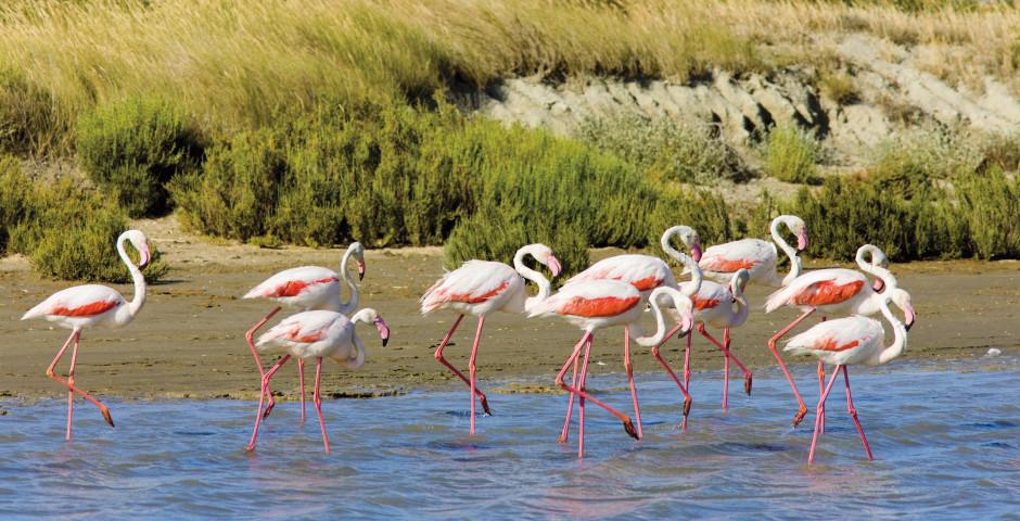 Flamingos in der Camargue - Frankreich - Frankreich
