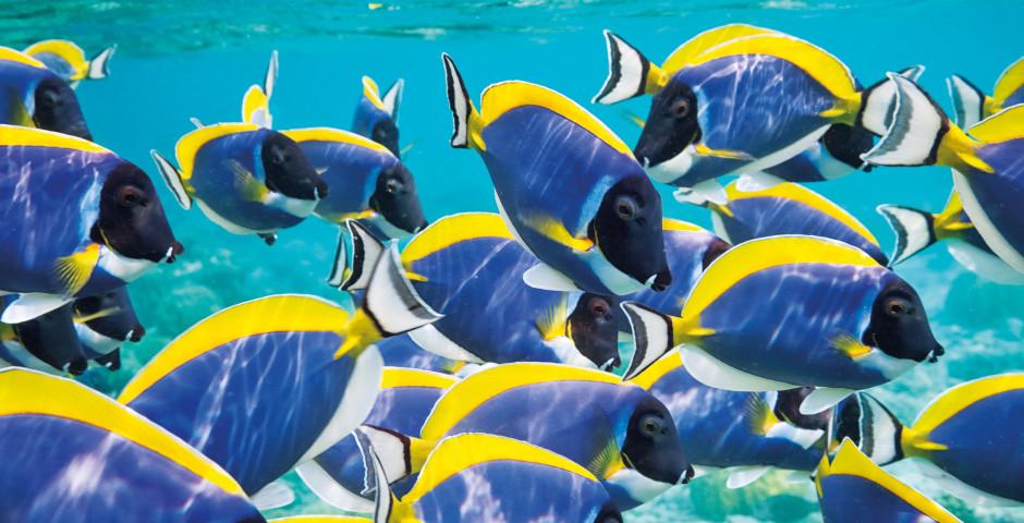 Unterwasserwelt - Malediven
