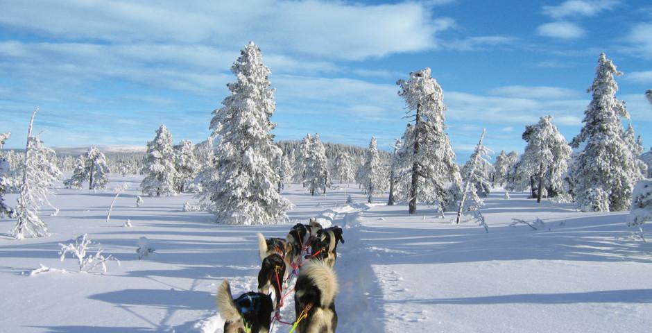 Levi (Finnland) Winterferien in Lappland mit Hotelplan - Levi