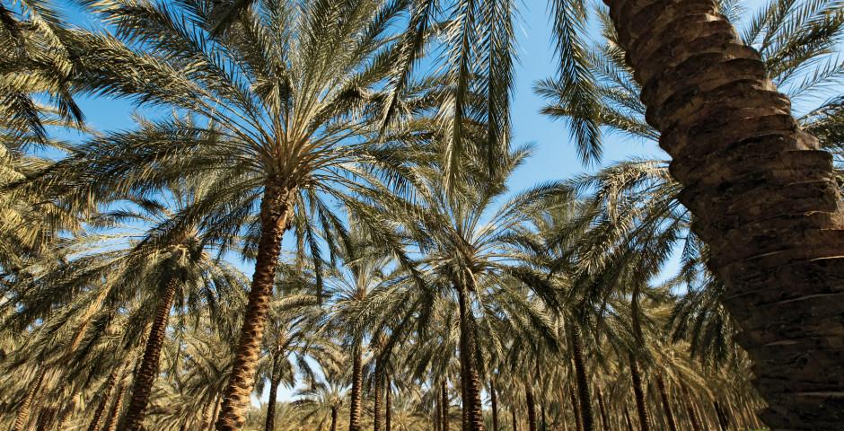 Djerba / Sud de la Tunisie