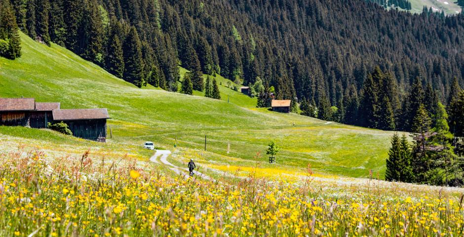Wandern in Lenzerheide-Valbella - Lenzerheide-Valbella