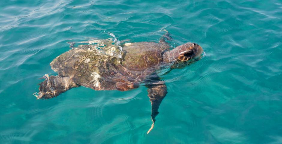 Meeresschildkröte - Zakynthos