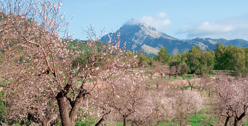Llucmajor - Mallorca