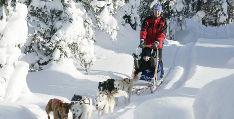 Schlittenhundefahrt - Ylläs