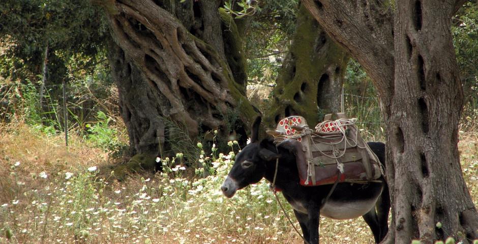 Übriges Korfu