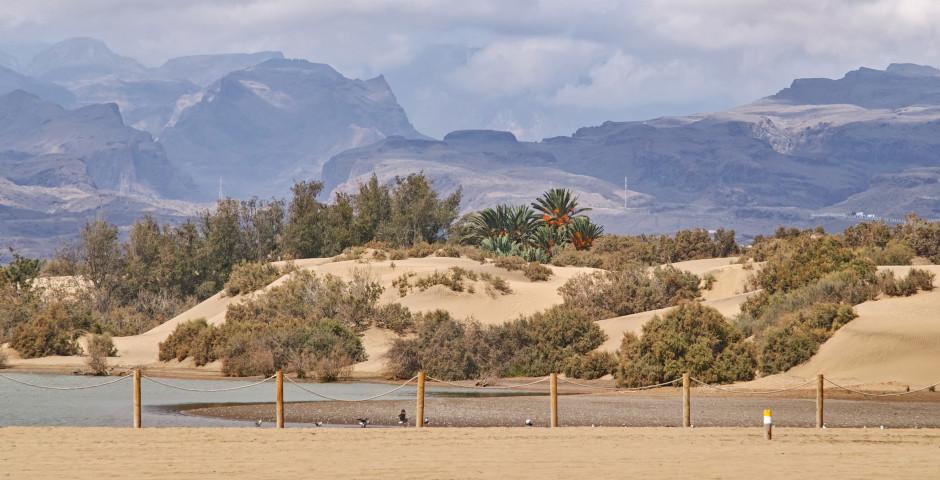 Kleines Naturschutzgebiet «La Charca» - Maspalomas