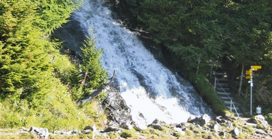 Wanderweg durch den Wald - Crans-Montana