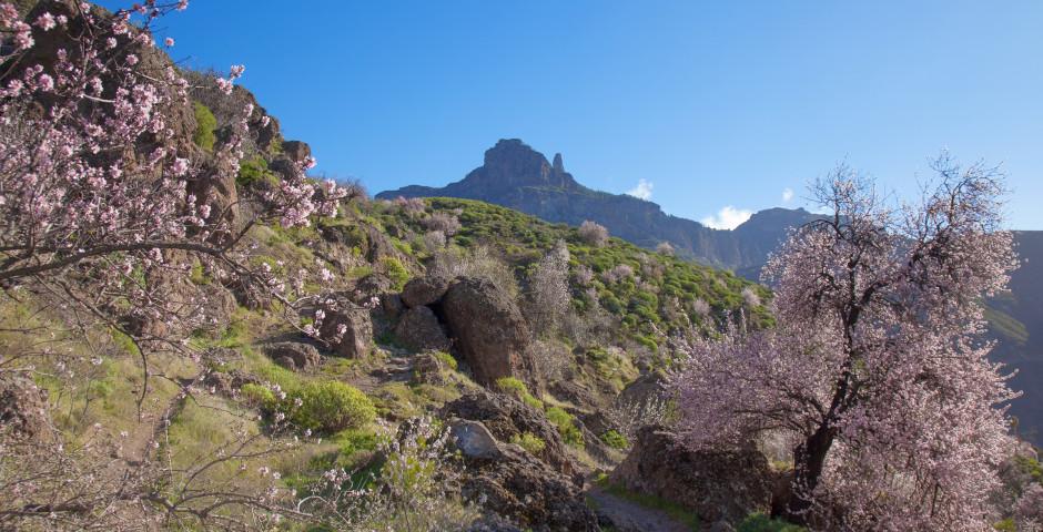 Frühling auf Gran Canaria - Gran Canaria Landesinneres