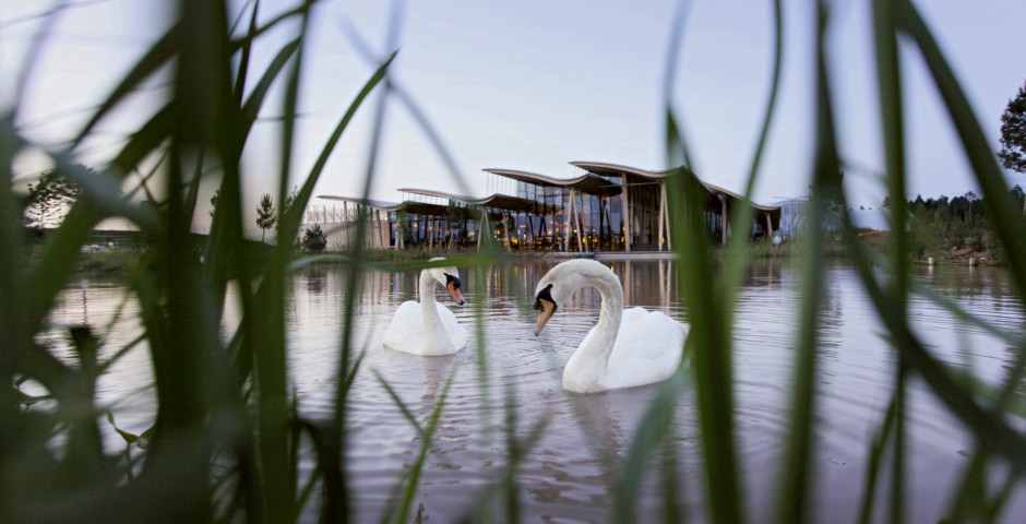 Cygnes - Center Parcs France