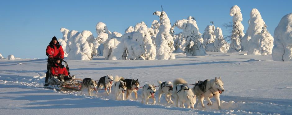 Mit dem Husky-Schlitten durch die Winterlandschaften