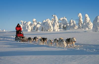 En traîneau à chiens dans le paysage hivernal