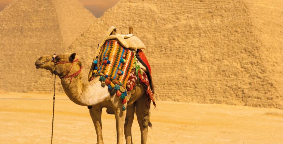 Pyramides - Le Caire & ses environs