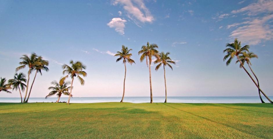 Palmen - Naples Beach