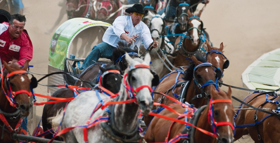 Course du chariot, Calgary Stampede - Calgary