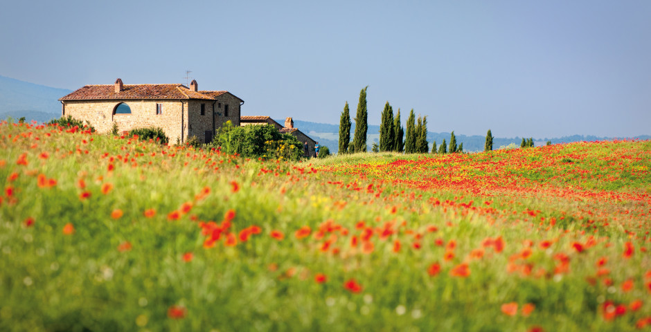 Mohnfeld in der Süd Toskana