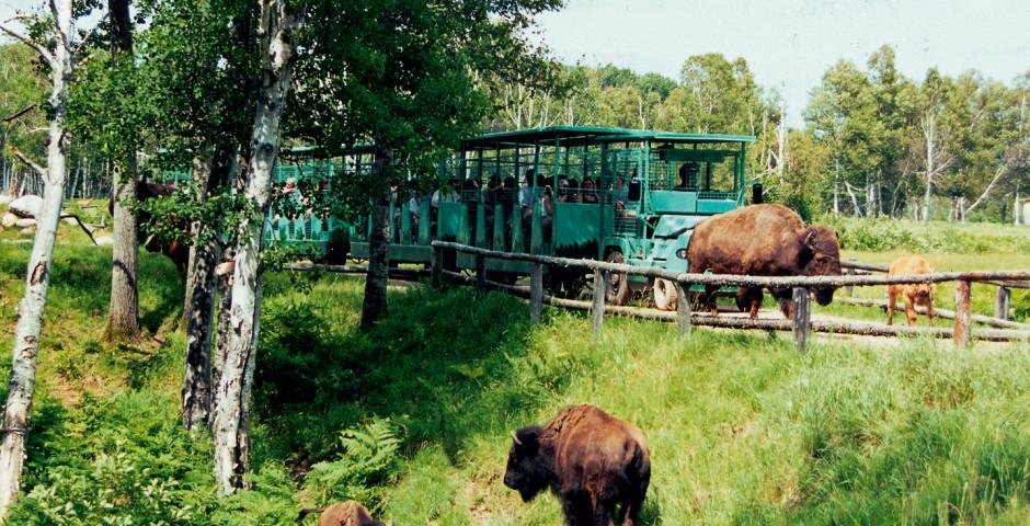 Zoo in St-Félicien - Quebec Stadt