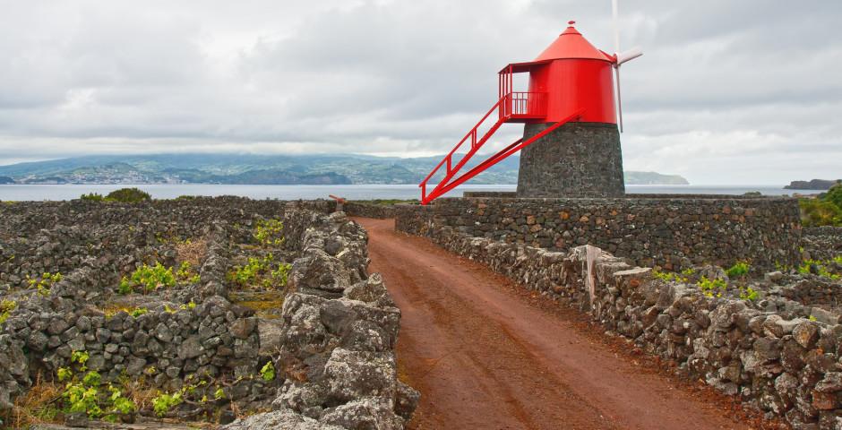 Pico - Les Açores