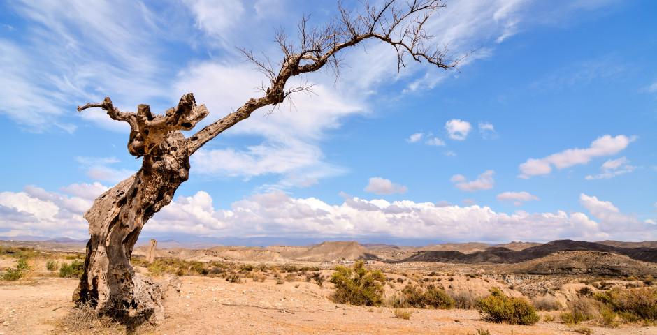 Tabernas Desert - Almeria