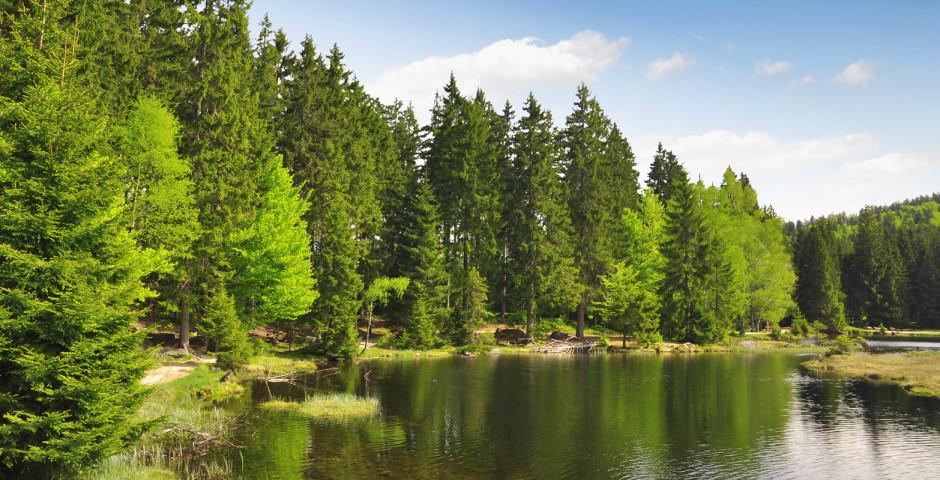 Petit lac dans la forêt bavaroise - Forêt bavaroise