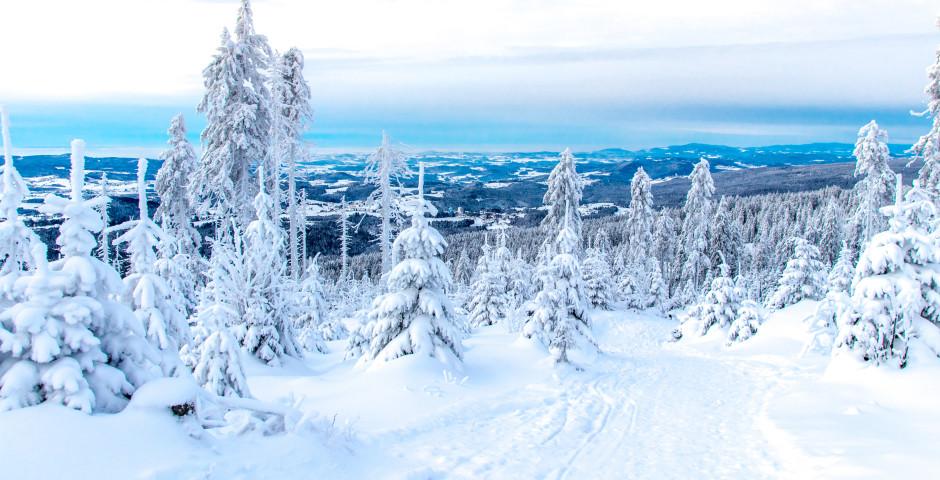 La forêt bavaroise en hiver - Forêt bavaroise