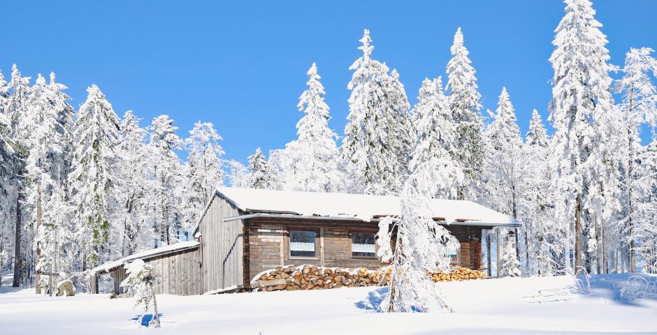 Paysage hivernale dans la forêt bavaroise - Forêt bavaroise