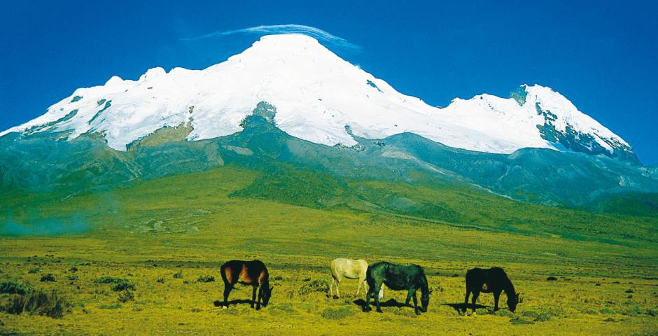 Reserva ecológica Antisana - Ecuador