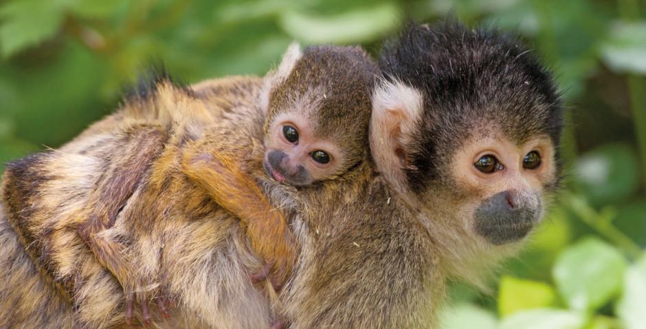 Le monde animal - Costa Rica