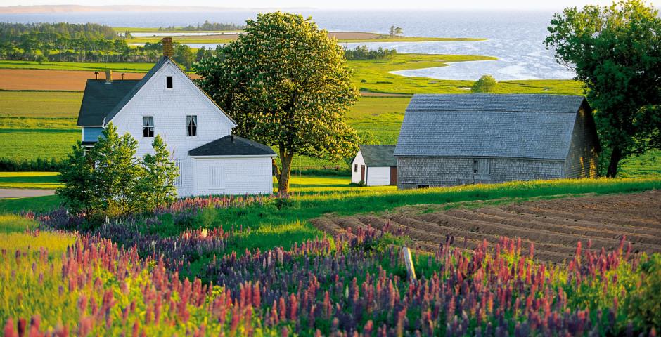 Farm - Prince Edward Island