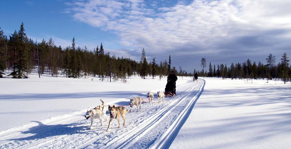 Traîneau à chiens - Kiruna