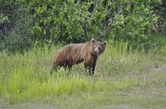 Bild 4 - Alaska-Yukon Explorer