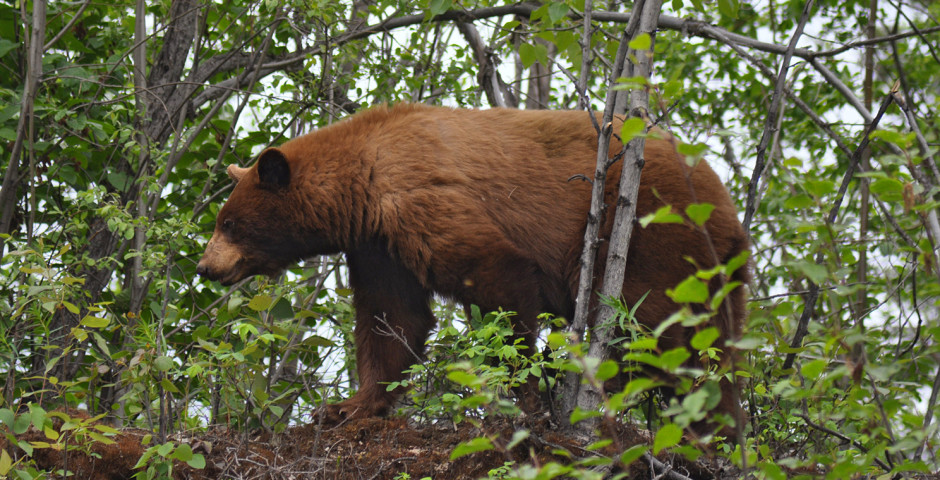 A Taste of Alaska and Yukon