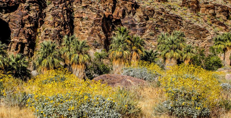 Paysage - Palm Springs