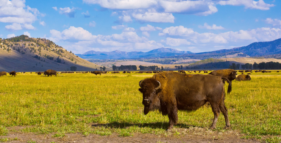 Parcs nationaux (USA)