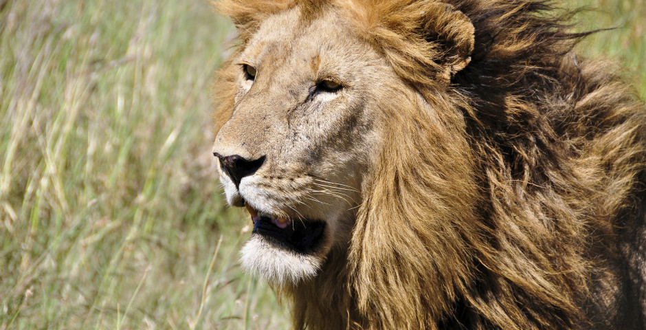 Tansania-Safari (Gruppe)