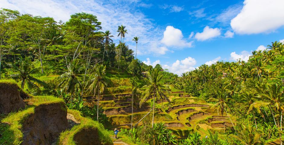 Tegalalang - Charmantes Bali