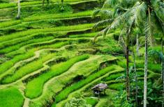 Bild 1 - Charmantes Bali
