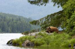 Natur und Tiere Westkanadas