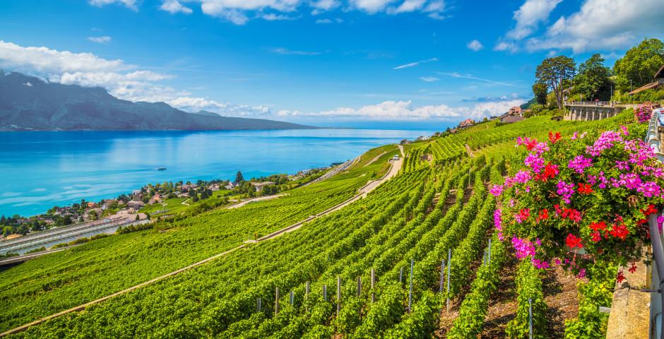 Weinregion Lavaux, Genfersee - Waadt