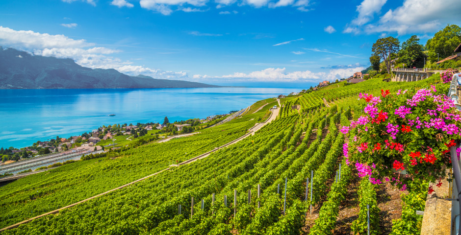 Weinregioin Lavaux - Waadt