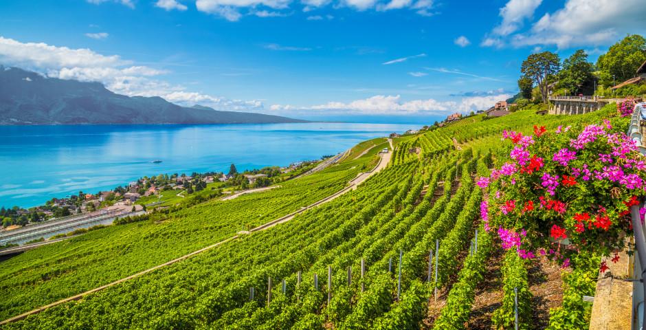 Région viticole du Lauvaux - Pays de Vaud