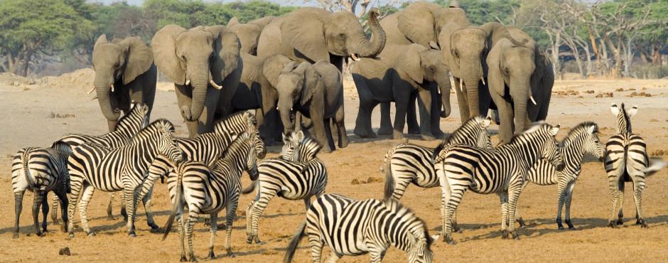 Kruger Nationalpark & Umgebung